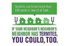 Infographic Termites