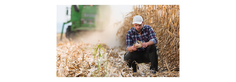 Cereal harvest