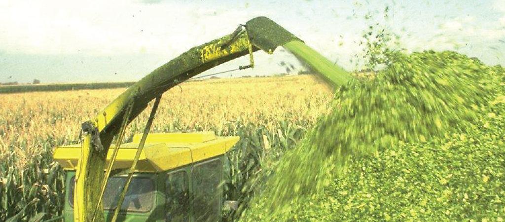 11CFT - specjalista do kiszonek z kukurydzy
