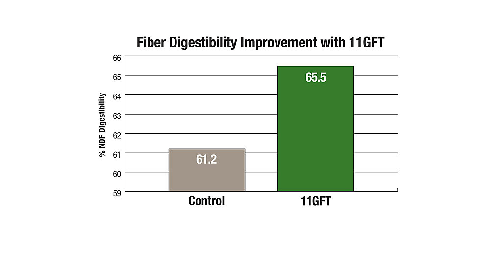 11GFT Fiber Digestibility Improvement Chart