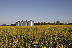 Silos in canola field
