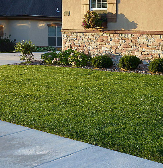 Image of green lawn in front of house