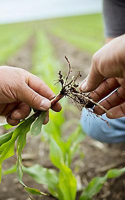 Dos manos sosteniendo las raíces de una planta.