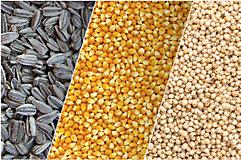 Girazon, maíz y sorgo