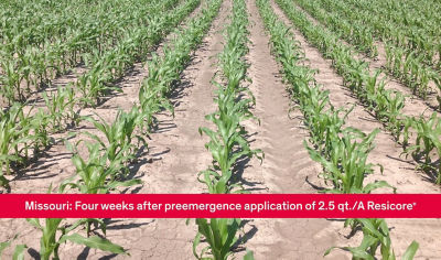 Video showing the power of Resicore® corn herbicide