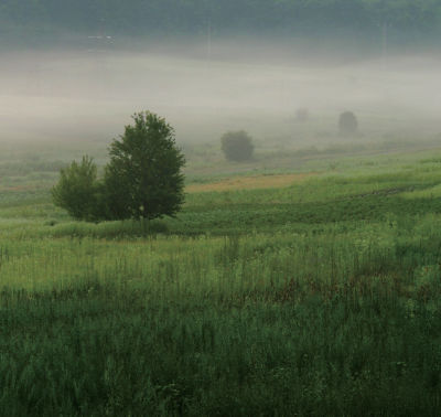 Image of field with fog