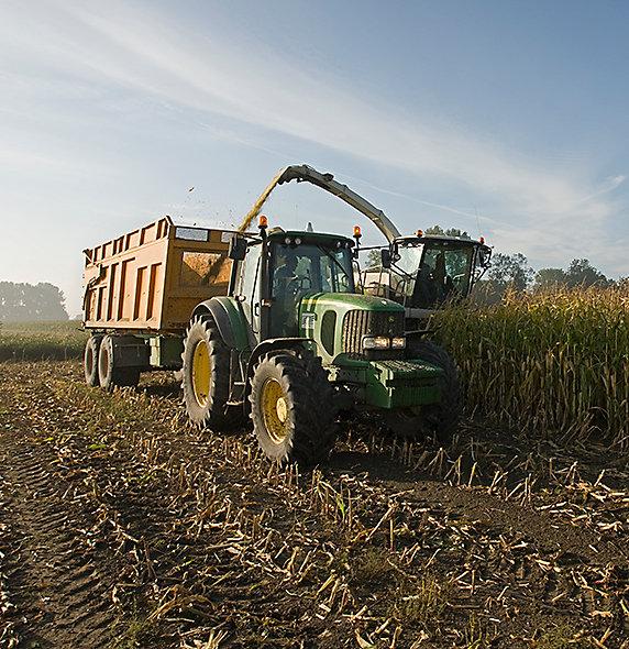 Sprawdź naszą ofertę kukurydzy na kiszonkę.
