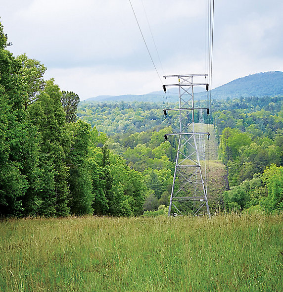 Image of power lines in forest