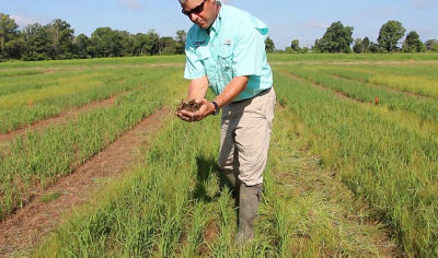 Loyant Herbicide - Demonstration by Jeff Ellis