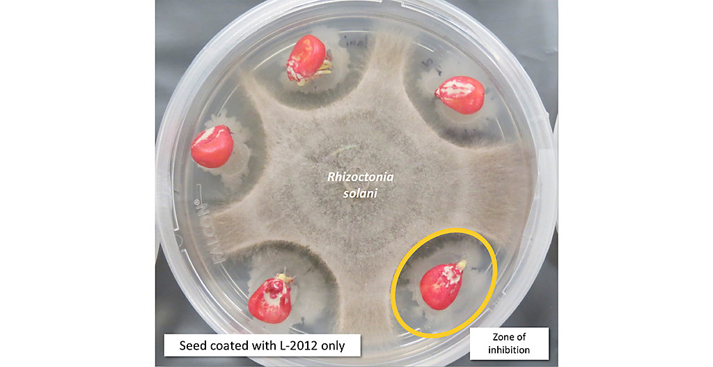 Technical photo of LumiGen seed