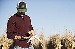 Examining corn ear - field close to harvest.