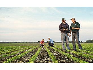 People working in field, emerging crop.