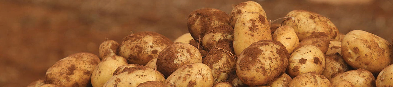 patates yakından