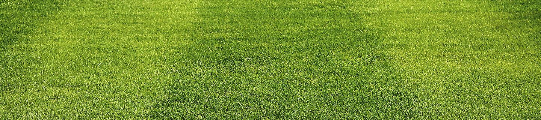 Starane trawniki