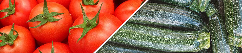 Pomodoro e Zucchino