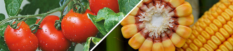 Pomodoro e Mais