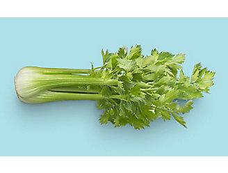 Celery_Stalk_Image_One