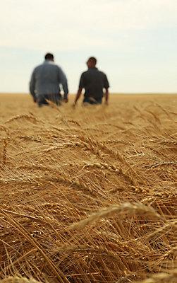 Farmers walking in mature wheat field