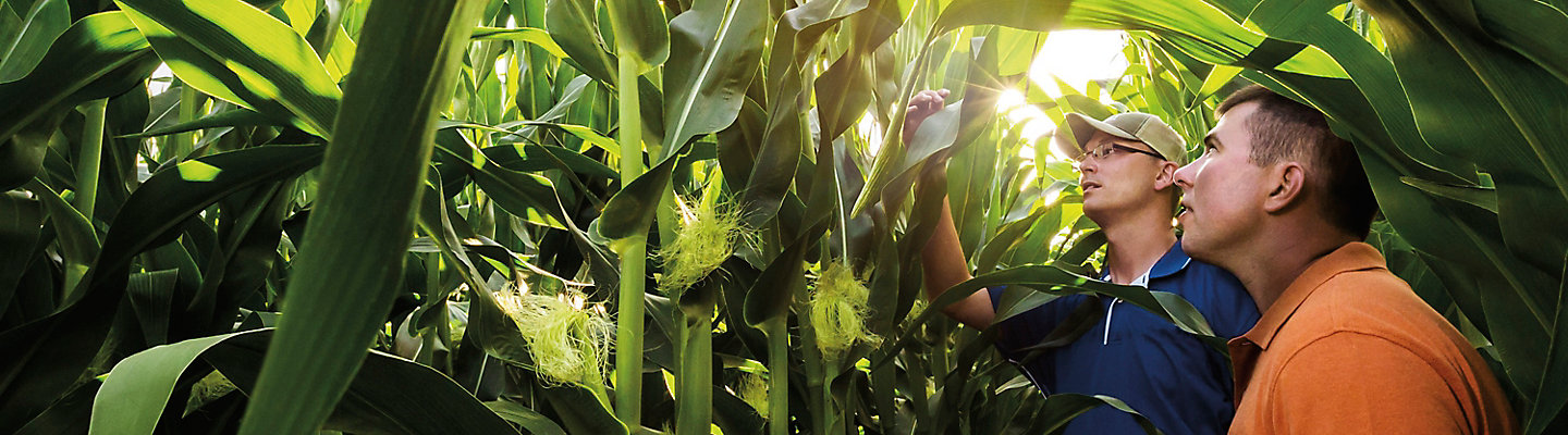 farmer-rep-in-late-season-corn-1_beauty_1-1