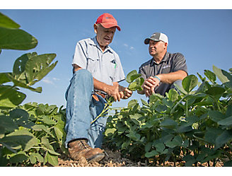 Ground view of farmers inspecting soybeans