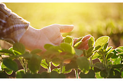 hand-inspecting-early-season-soybean-1_850pix