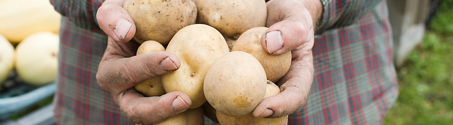 hands-holding-potatoes-1_beauty_1_1