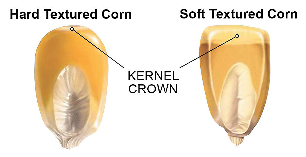 Kernel crown graphic