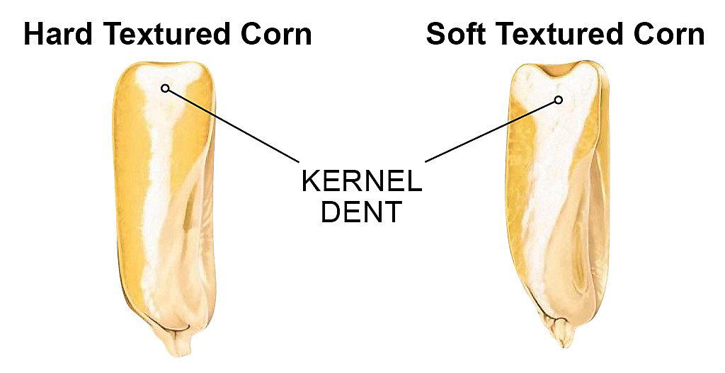 Kernel dent graphic