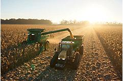 Harvesting corn in field