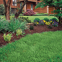 Image of front lawn landscaping