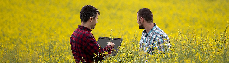 LumiGen Rzepak - technologie nasienne nowej genracji.