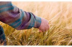 man-in-late-season-wheat-field-1_beauty_850pix