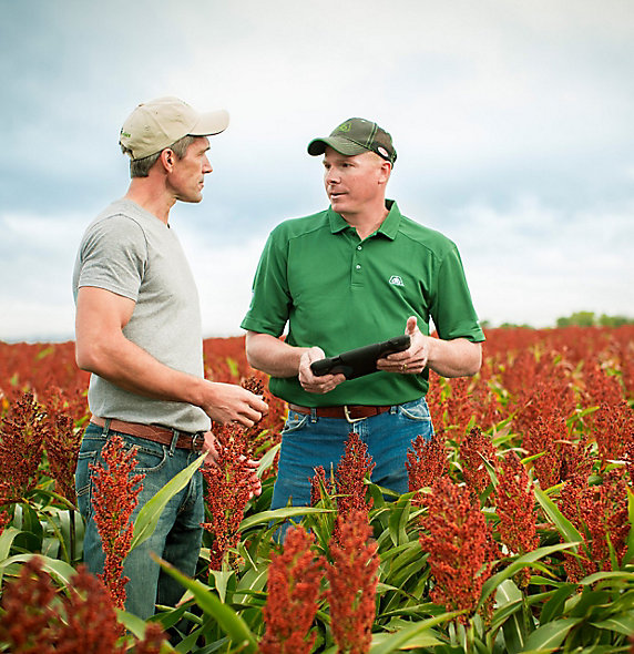 Representative and farmer talking in sorghum field