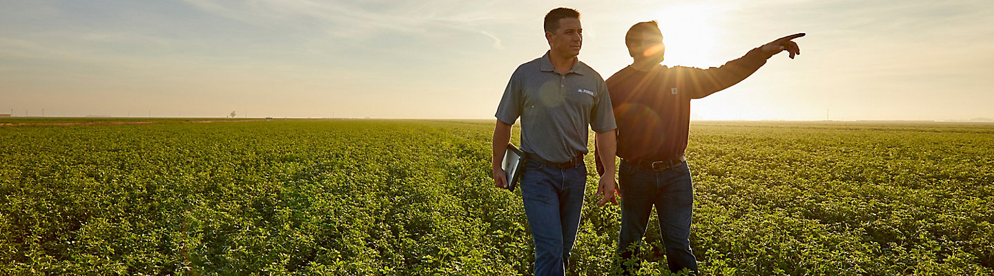 Men walking in alfalfa field