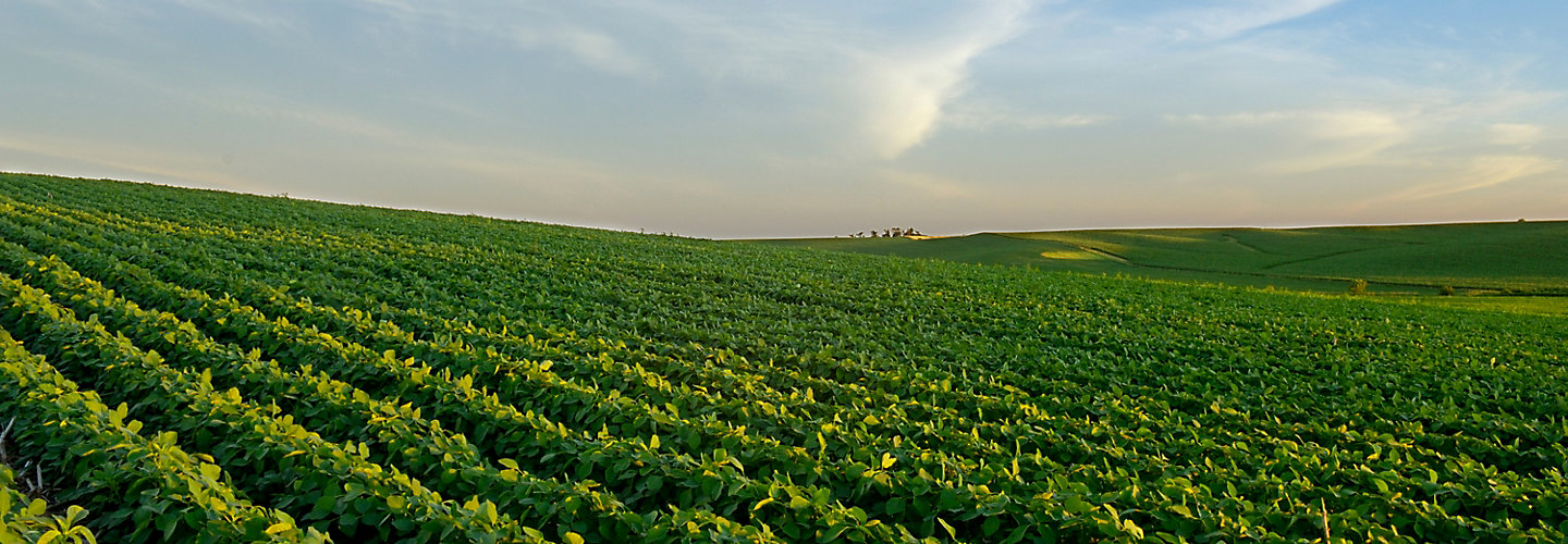 mid-season-soybeans-1_beauty_063-1