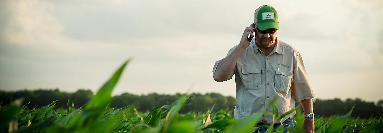 man walking in midseason corn