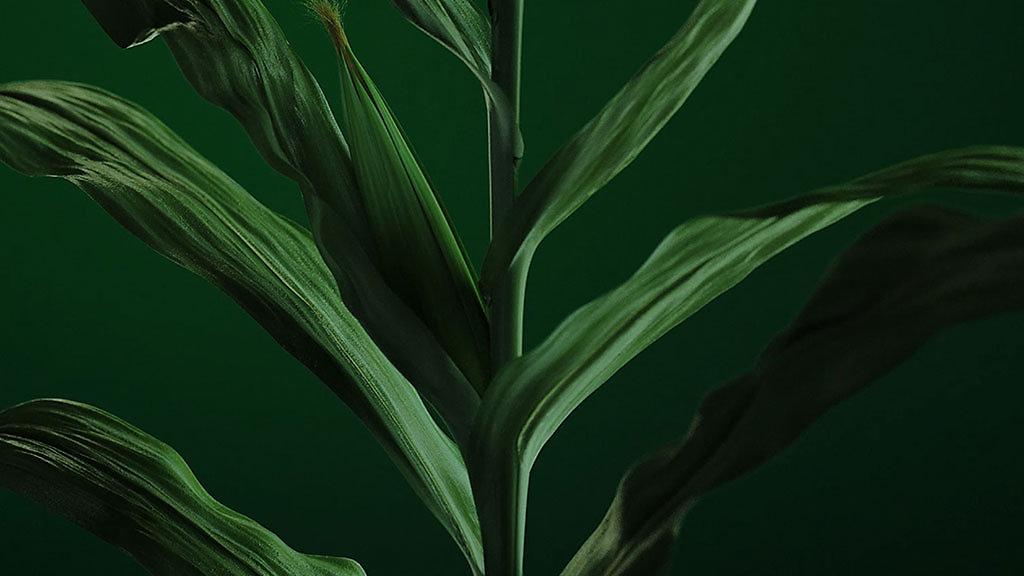 NCGA 2019 Corn Yield Contest