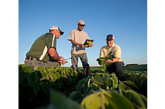 Inspecting midseason soybean field