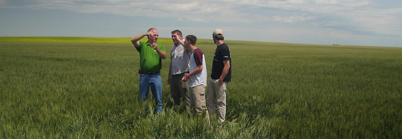 People in wheat field