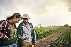 Two farmers looking at a crop