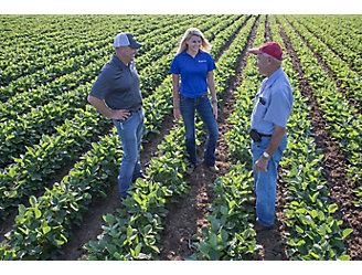 People talking in a soybean field