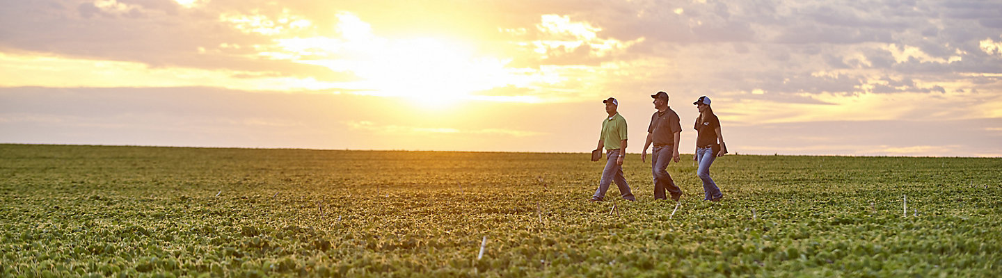 Three farmers walking through their field with the sunset behind them