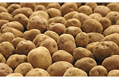 potatoes-in-a-pile-1_beauty_850pix