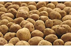 potatoes-in-a-pile-1_beauty_850pix