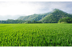 rice-field-mountain-horizon-1_beauty_850pix