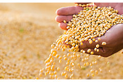 IMG_soybean-seed-spilling-from-hands-1_beauty_850p