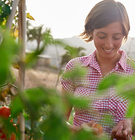 woman-harvesting-tomatoes-2_beauty_097-1