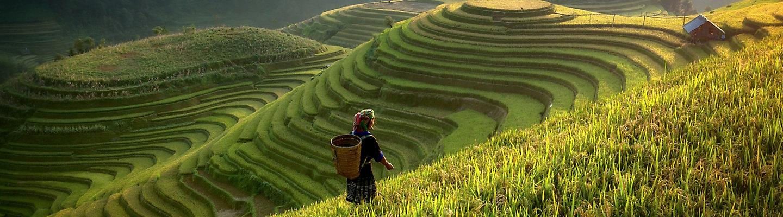 Farmer walking along terrace farm