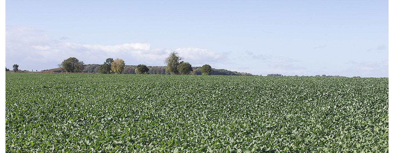 Maize header