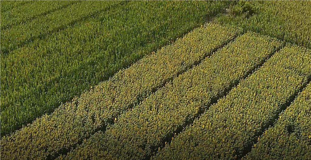 Lumisena鈩� Fungicide Seed Treatment